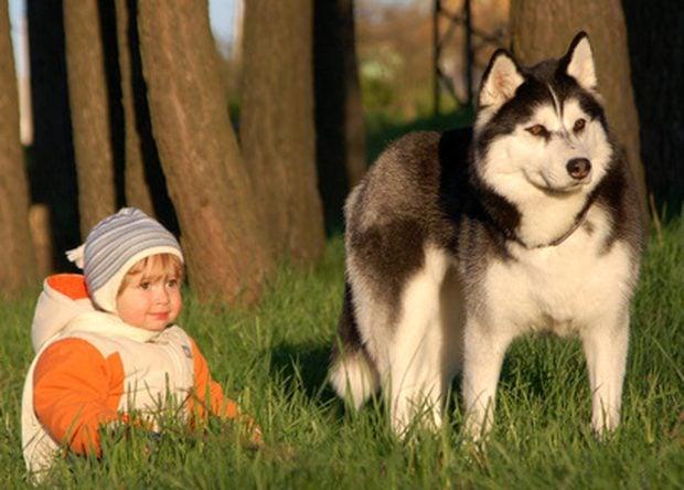 husky y niño atardecer sol pasto