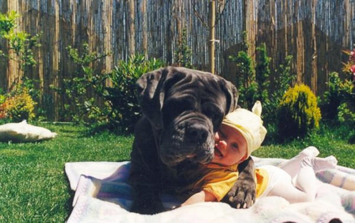 perro acostado bebé