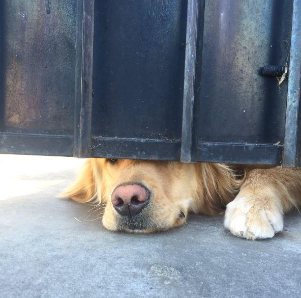 perro asomado por abajo de portón