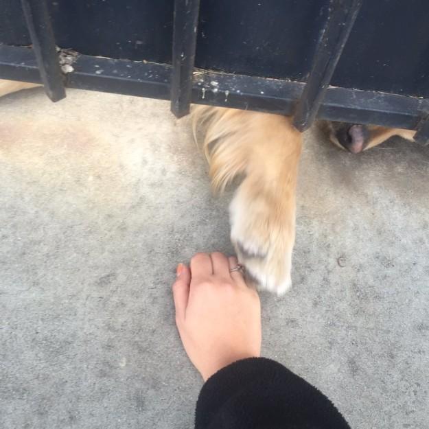 pata de perro asomándose por el portón