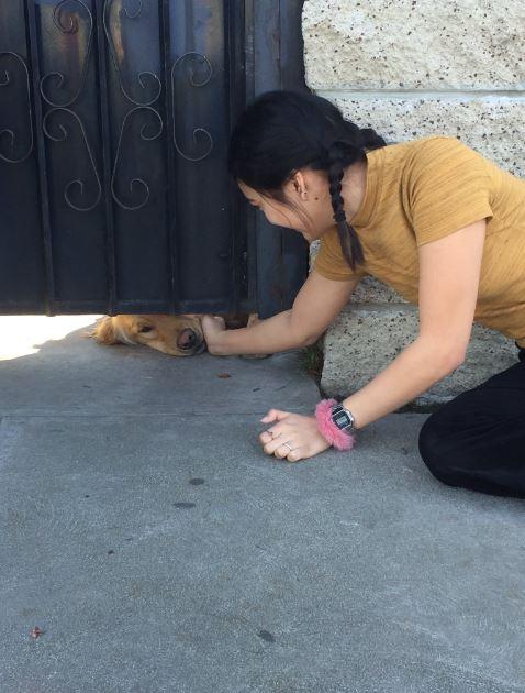 chica acariciando a perro por la parte de abajo del portón