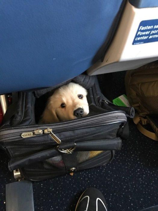Los perros más bonitos