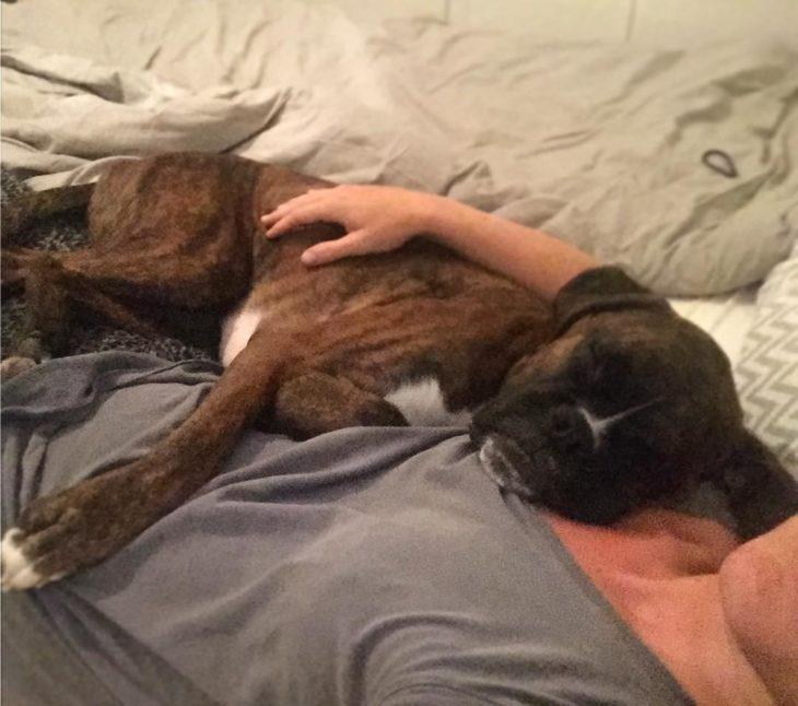perro tomando la siesta con su dueña