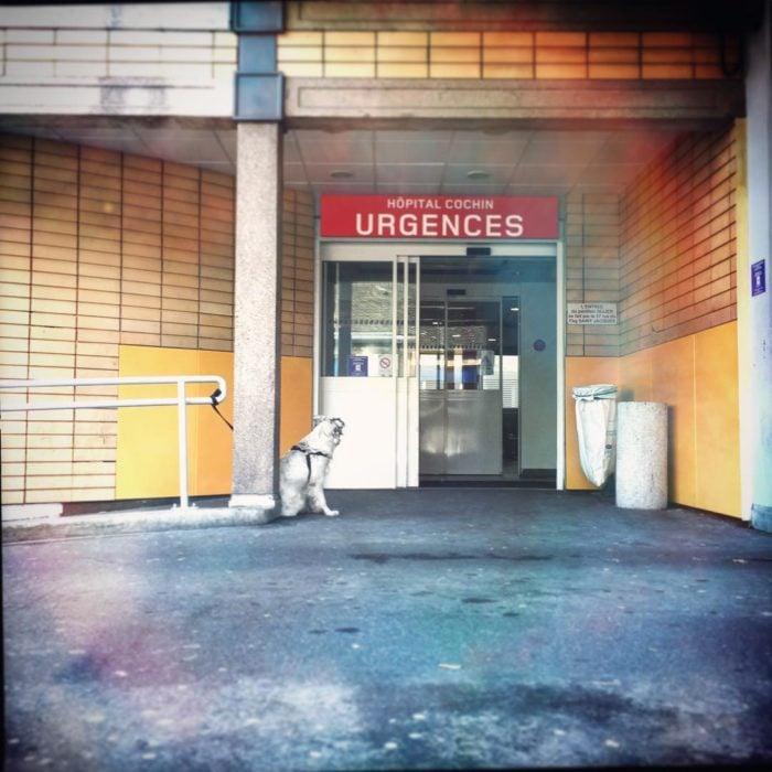 perro esperando afuera de urgencias