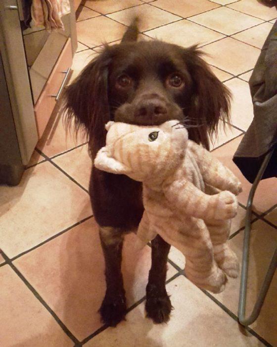 perro trae juguete favorito