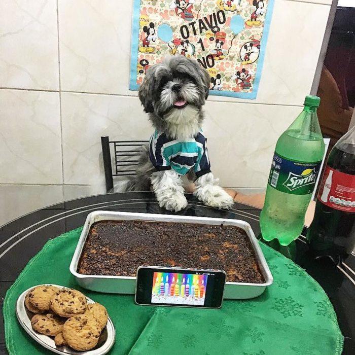 perro frente a comida quemada