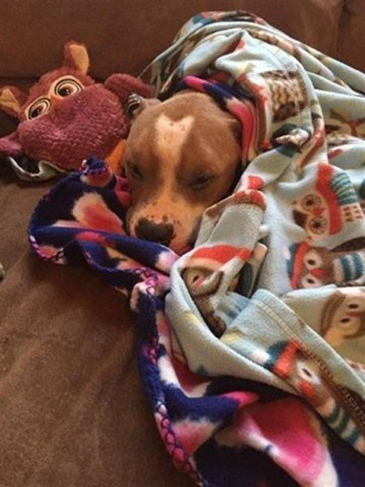 perro cubierto de cobijas