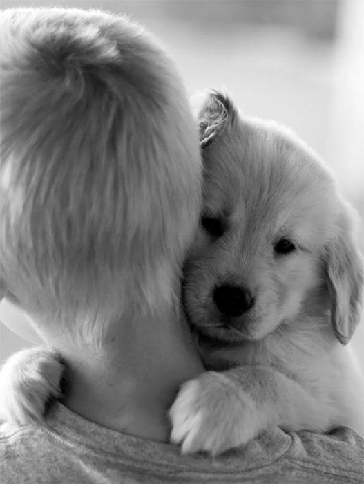 abrazo perrito cachorro niño