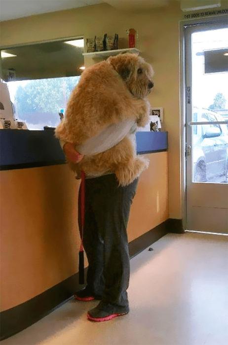 perros abrazo miedo peludo