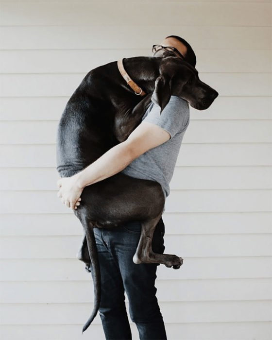 abrazo perro gran danés
