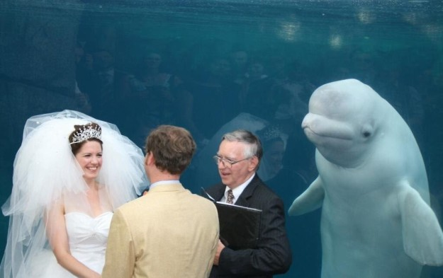 boda beluga infiltrada boda