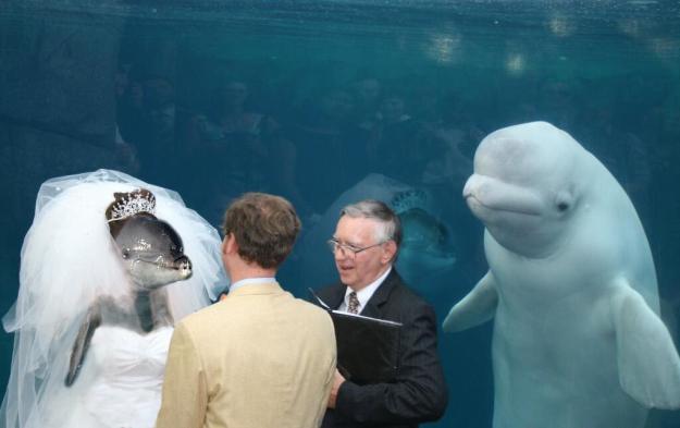 delfín boda acuario
