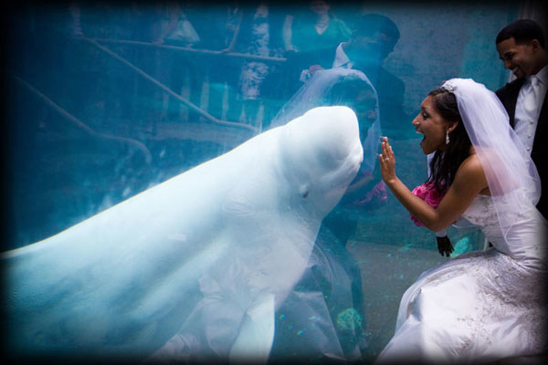 novia y beluga