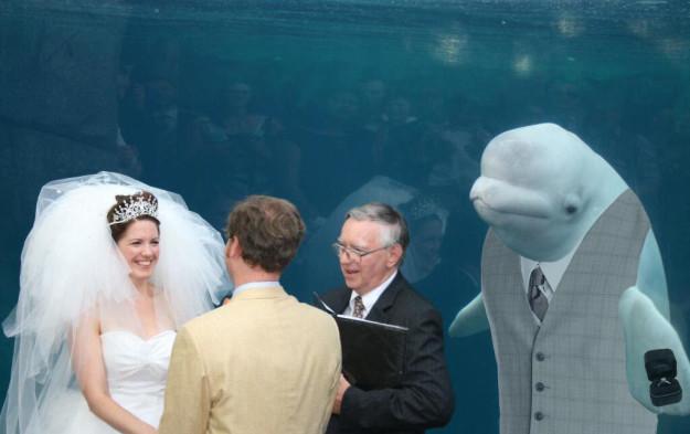 beluga padrino de anillos