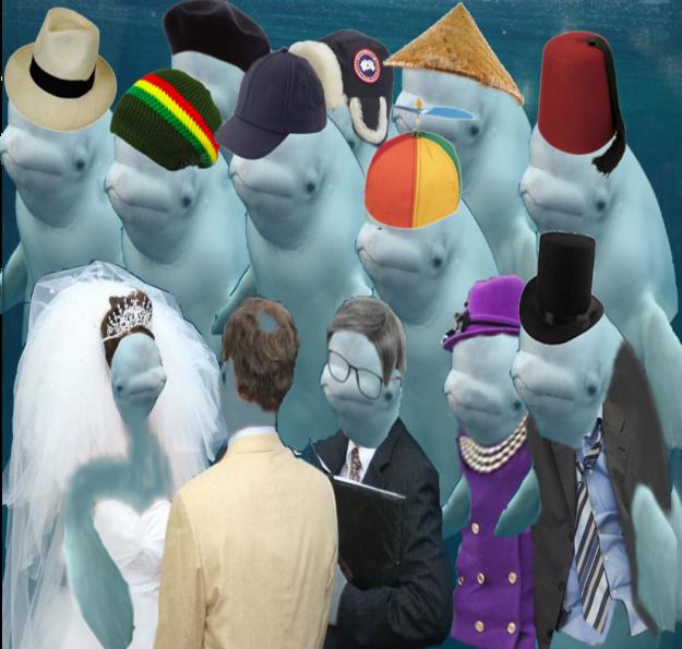 beluga boda photoshop familia