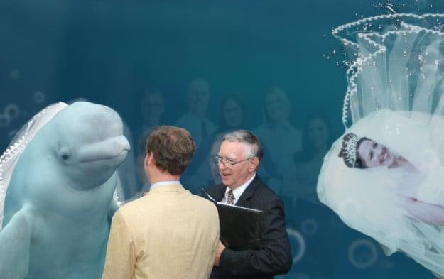 beluga boda humano