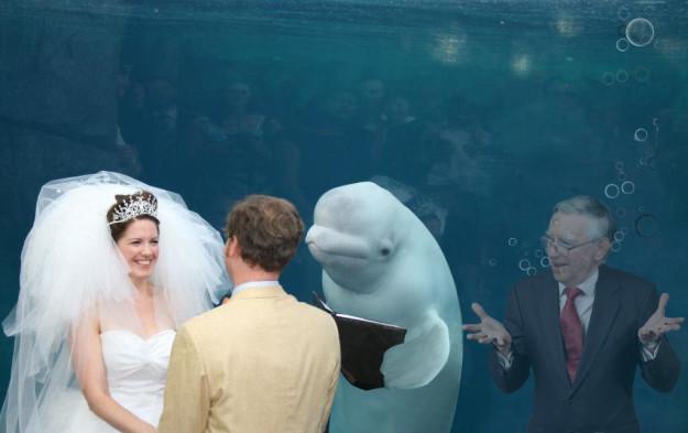 juez beluga boda