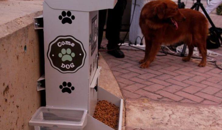 comedor público para perros