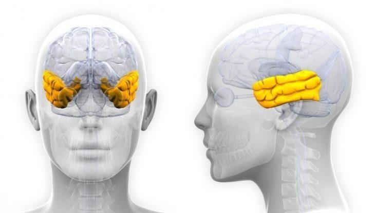 Lóbulo cerebro