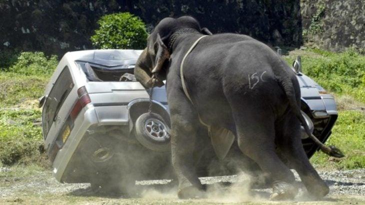 elefante ataca a una caminoneta
