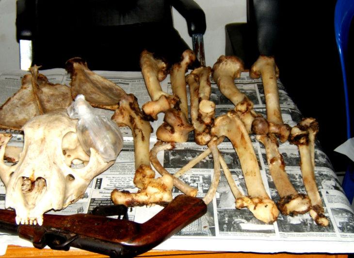 huesos de tigre