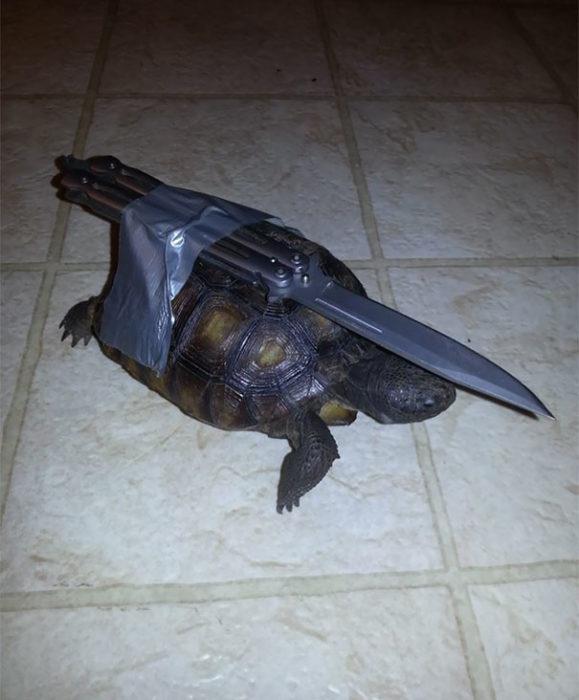 tortuga con un cuchillo