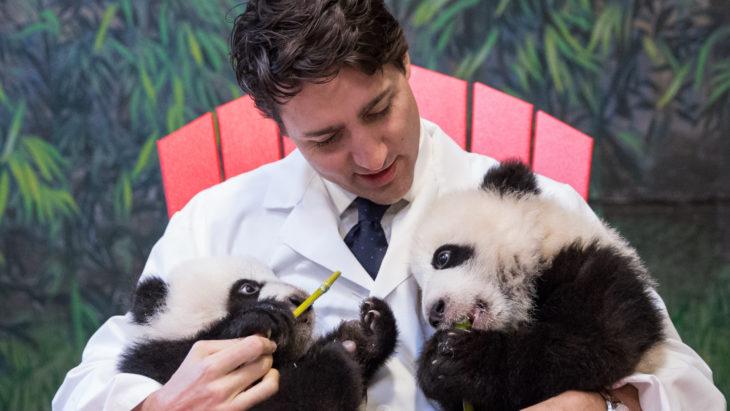 justin trudeau y osos panda