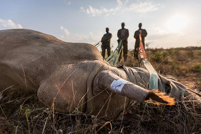 parque kazaringa rino muerto