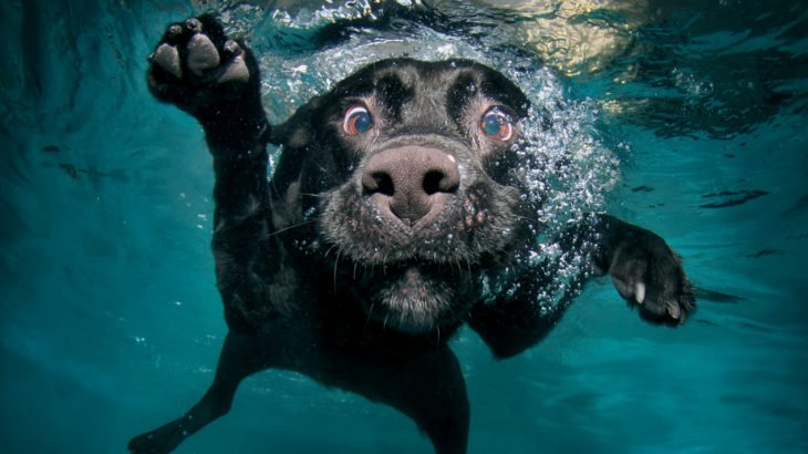 perro nadando