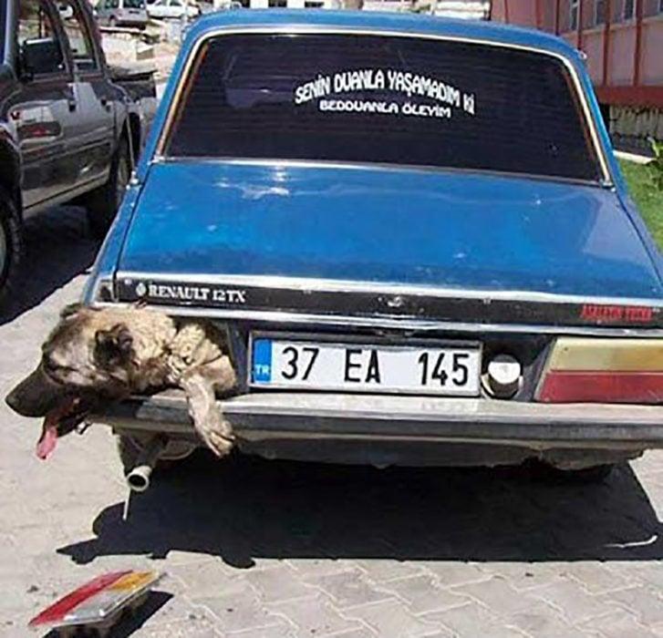 perro en cajuela de auto saca la cabeza por sonde van las luces