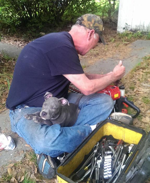 hombre trabajando con un perro en su regazo