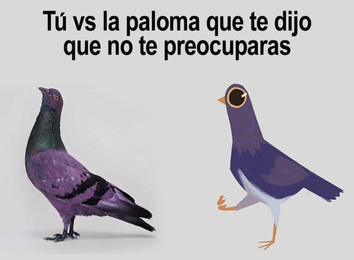 meme tu vs la paloma que de tijo que no te preocuparas