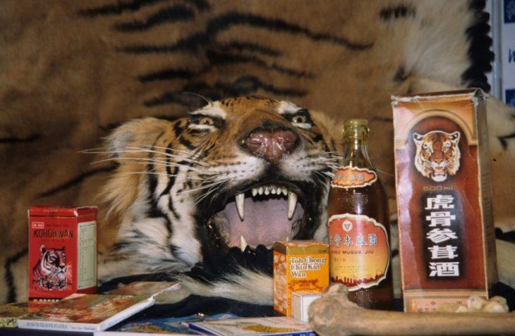 botellas de vino de tigre con cabeza de tigre