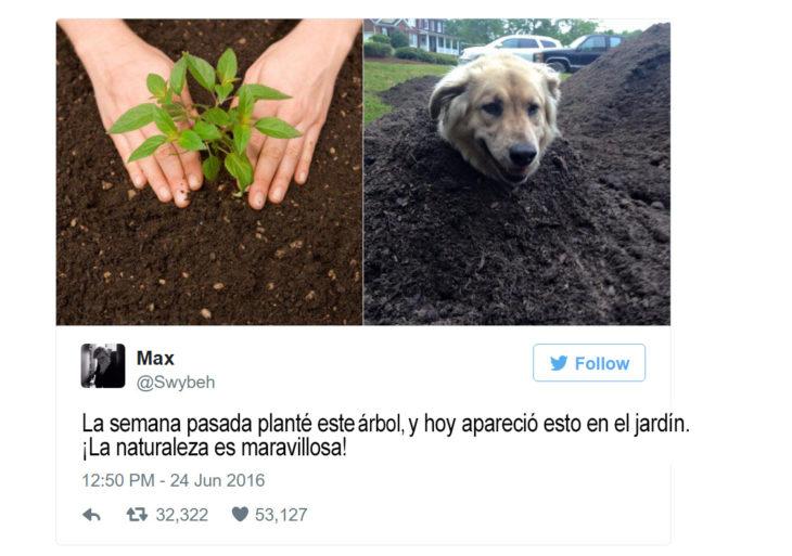 tuit sobre una mujer que planta una planta y crece un perro