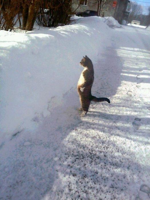 gato en 2 patas observando la nieve