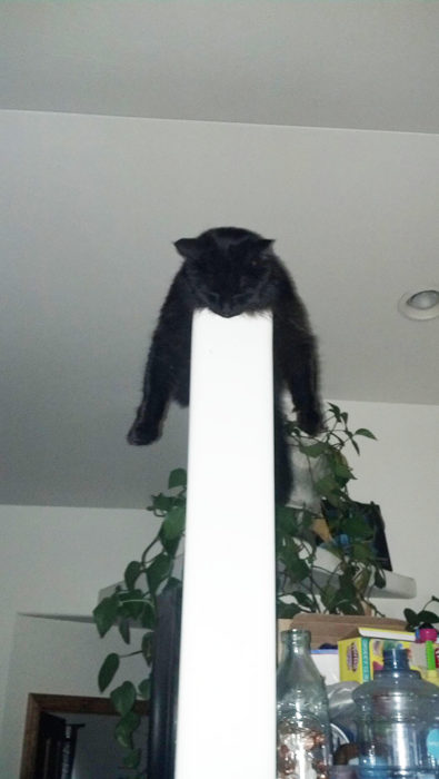 gato dormido en una pared delgada