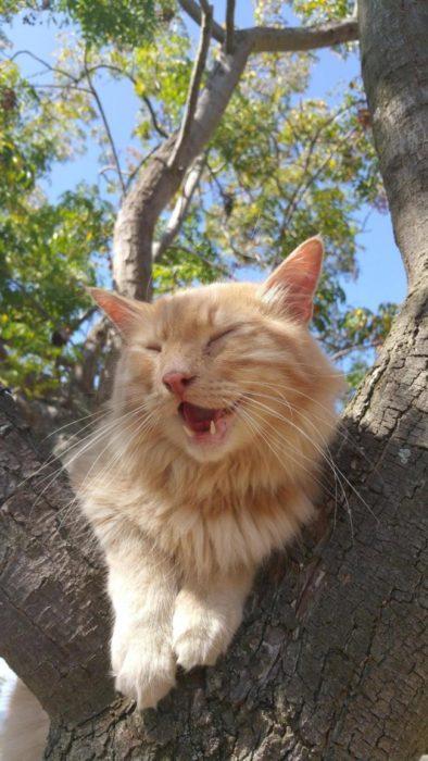 gato riéndose árbol