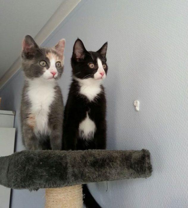 gatos observando algo