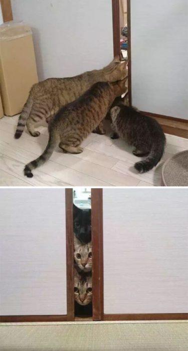 gatos asomándose por la puerta