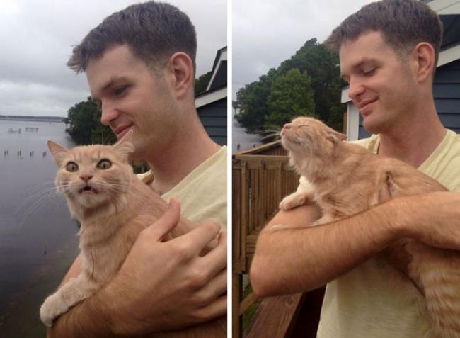 gato por primera vez sale