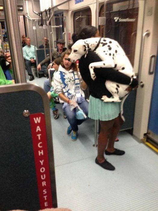 dálmata en el metro