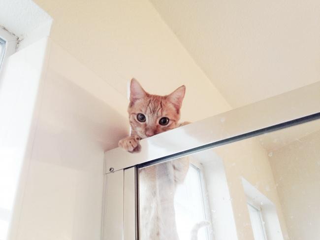 primera vez marco baño gato