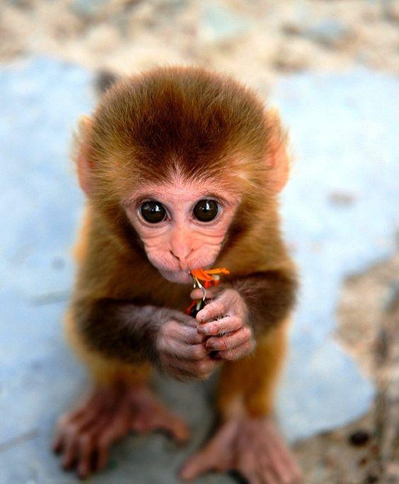 15 Animales Bebés Que Te Harán Sonreír Todo El Día Con Su Ternura