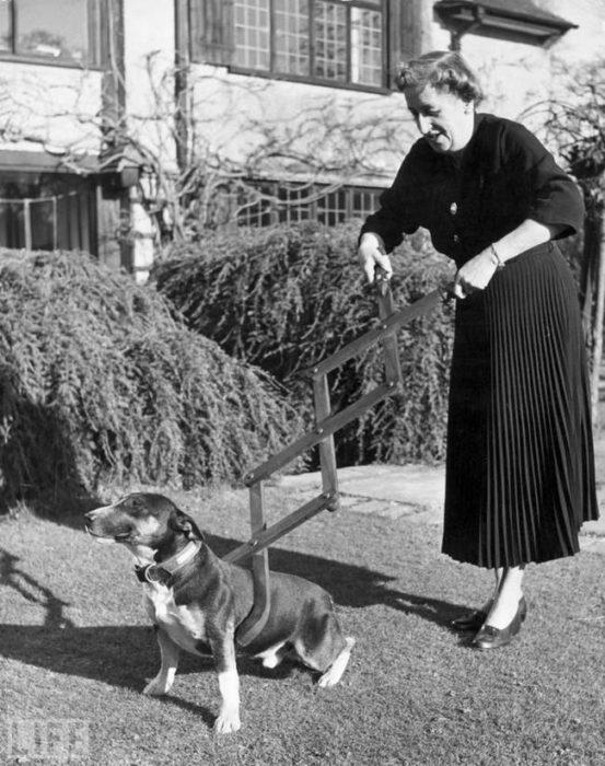 perro correa rudimentaria vintage objetos bizarros