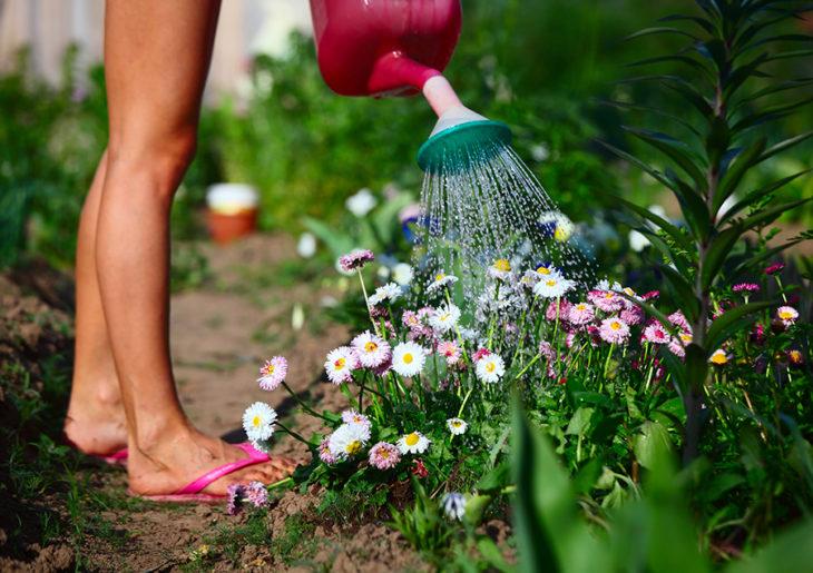 cuidado de jardín