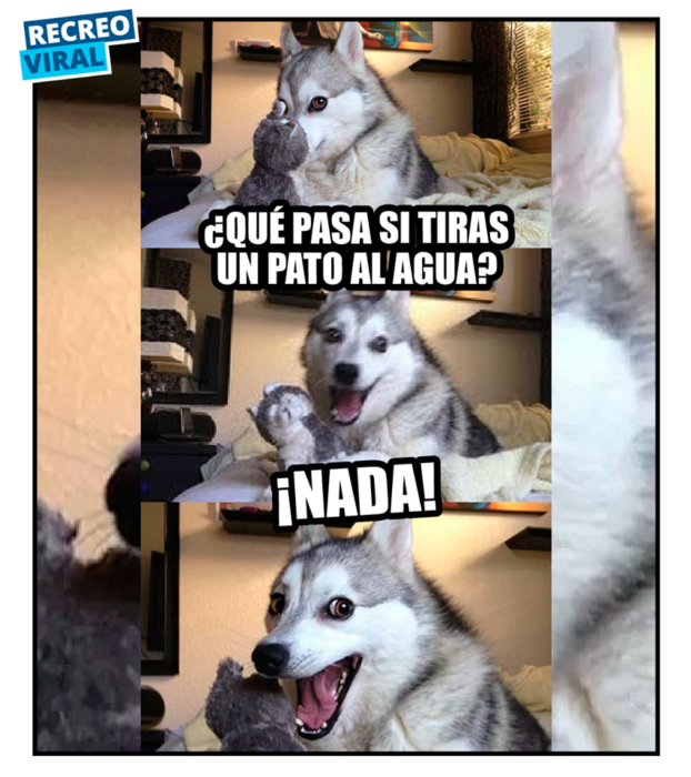 memes del perrito husky