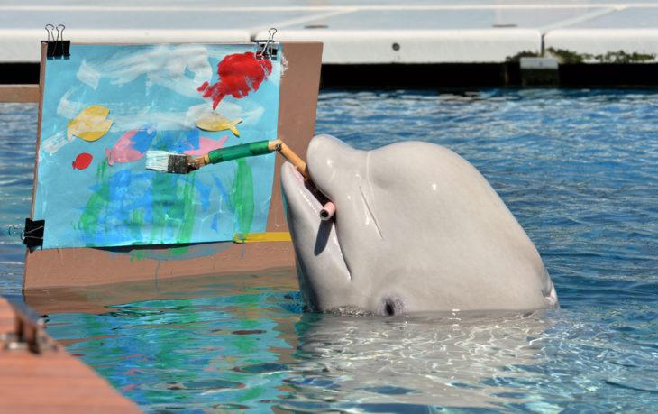 delfin inteligente