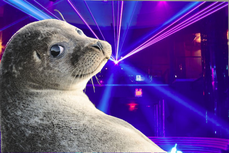 fiesta disco luces foca sonriente