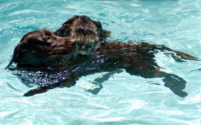 perro rescatando a un gato del agua
