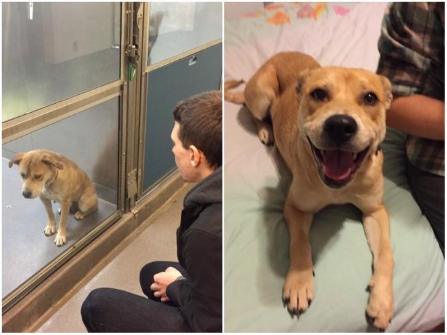 Perro antes y después de ser adoptado